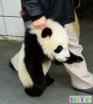 卡通熊猫头像简笔画